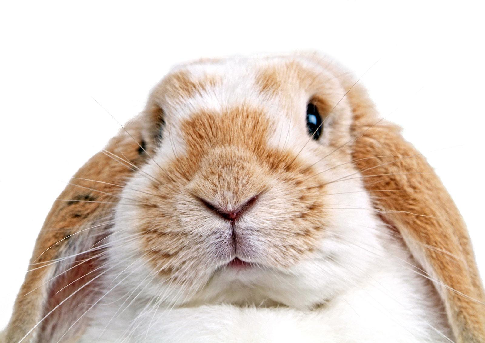 Erfreut Lebenslauf Kaninchen Galerie - Beispiel Business Lebenslauf ...