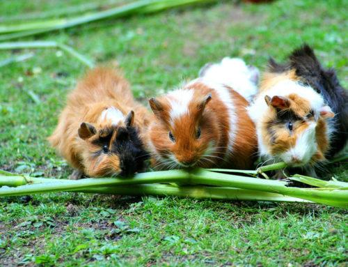 Kleine Heimtiere im Sommer