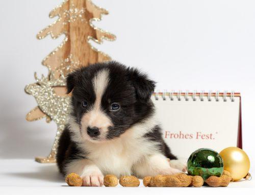 Unsere Sprechzeiten an Weihnachten und Silvester
