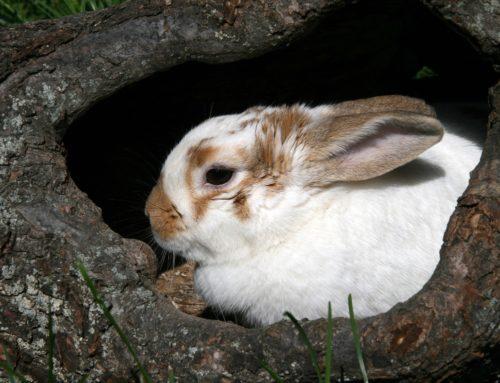 Kaninchenimpfungen