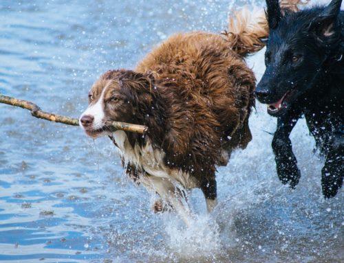 Tag des Hundes am 17. Juni 2019