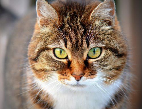 8. August 2019 Tag der Katze